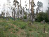 Викинги «Деревня Викингов»